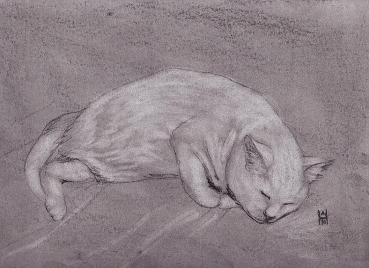 6/7/13 Daily Dose - Yuki sleeping